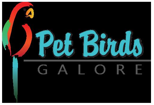 Wholesale Birds & Pet Birds Adelaide | Pet Birds Galore - Pet Birds